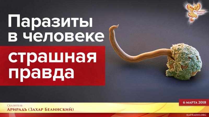 эфир черви